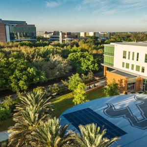جامعة جنوب فلوريدا