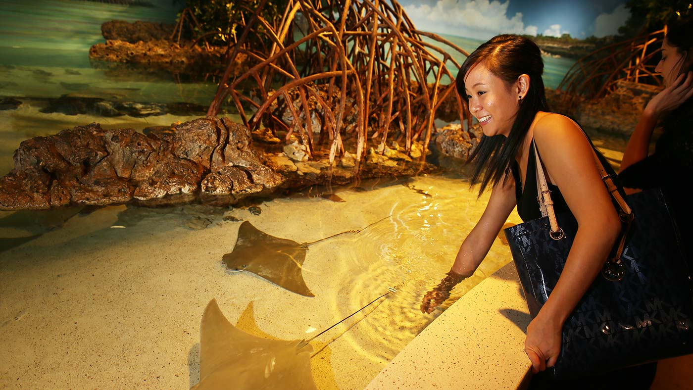 Sting ray swims past student at the aquarium in Boston.