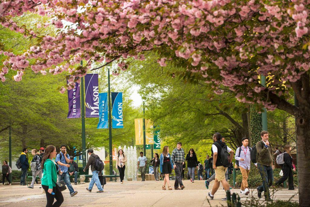 Cherry blossom trees line Mason's Fairfax Campus in Spring