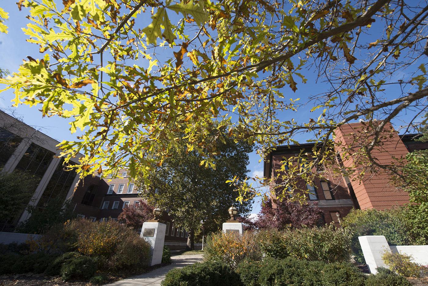 Campus trees at Illinois State University